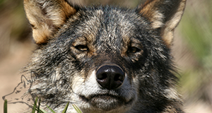 things to do at the wolf park